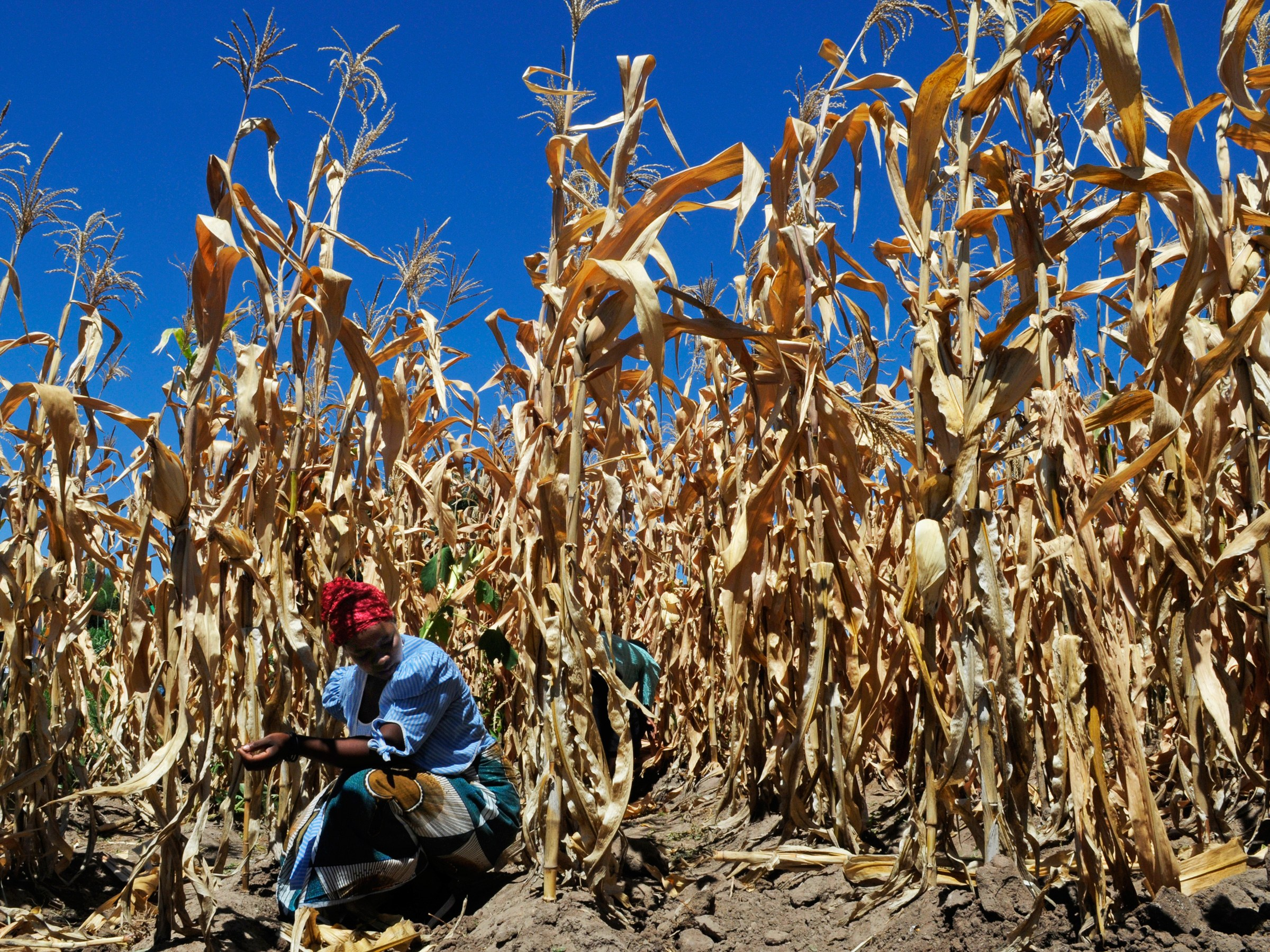 Big Ag Is Sabotaging Progress on Climate Change