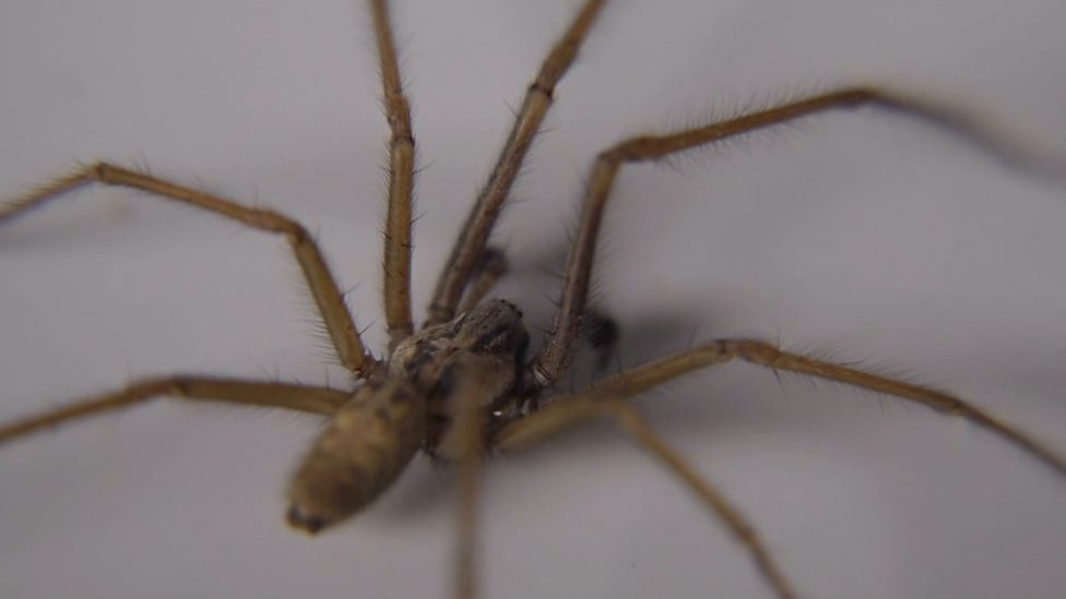 What's the truth about spiders in our homes?