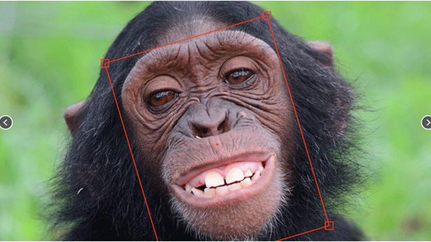Facial recognition tool tackles illegal chimp trade