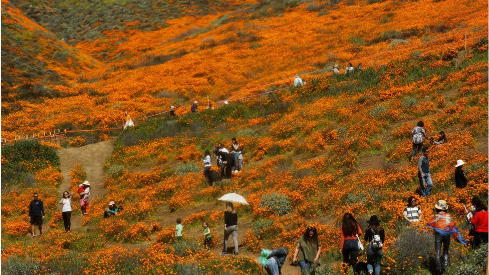 Super bloom tourists cause small town 'safety crisis'